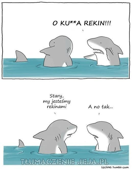 Wszyscy boją się rekinów