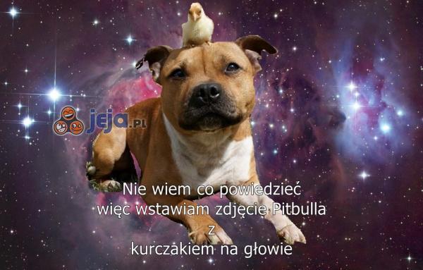 Pitbull i kurczak przez galaktykę