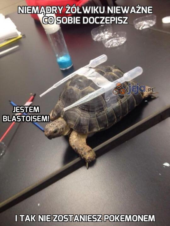 Niemądry żółwiku nieważne co sobie doczepisz