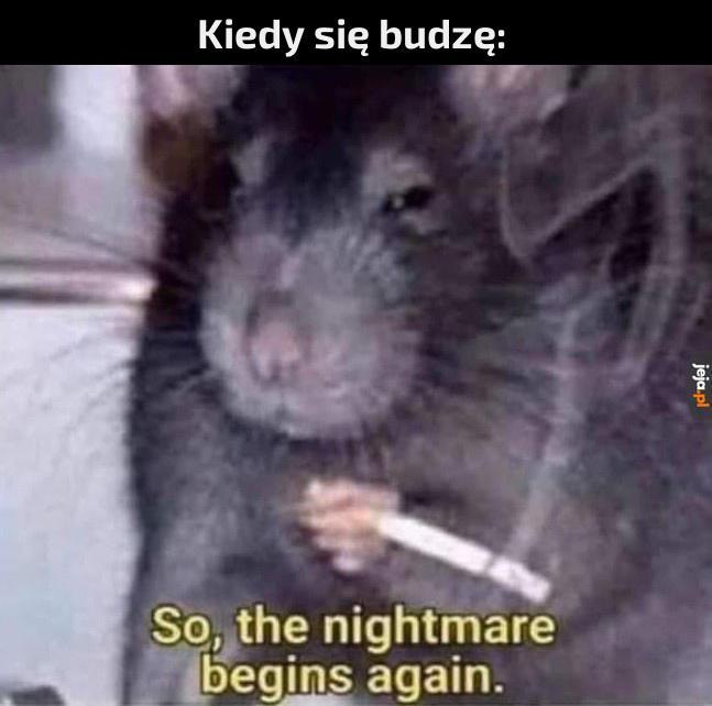 Kolejny dzień w Polsce