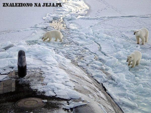Niedźwiedzie i łódź podwodna
