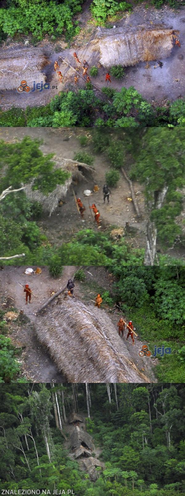 Pierwsza styczność dzikiego plemienia z cywilizacją