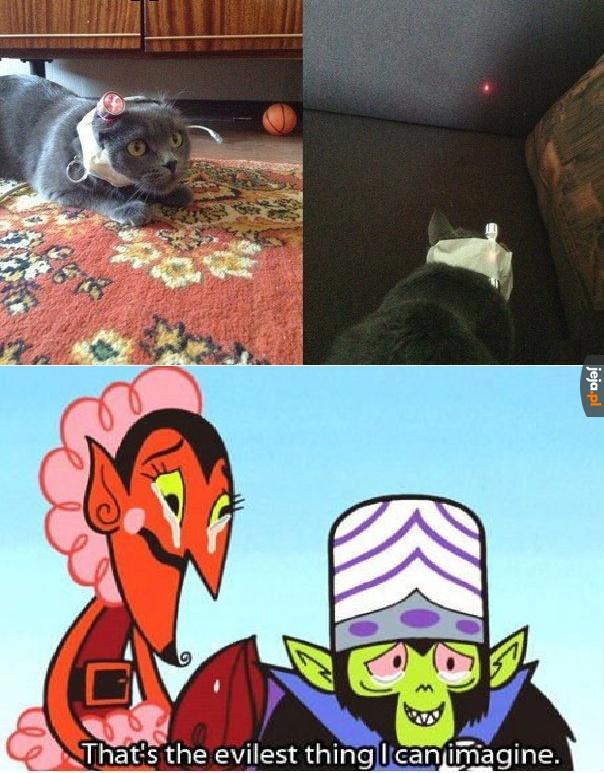 Kot samowystarczalny