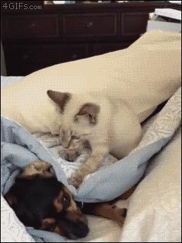 No weź, nie śpij!