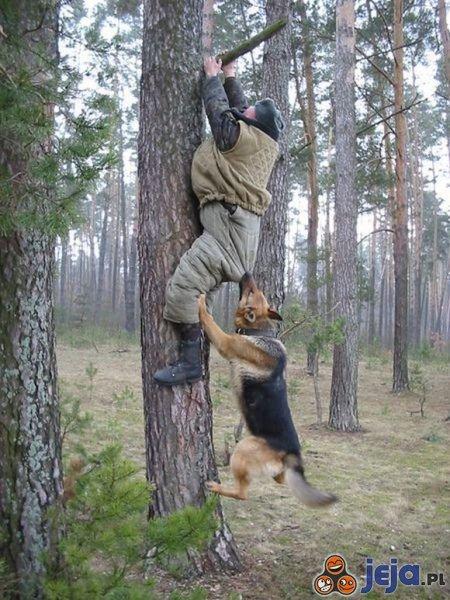 Kto pierwszy na drzewo?