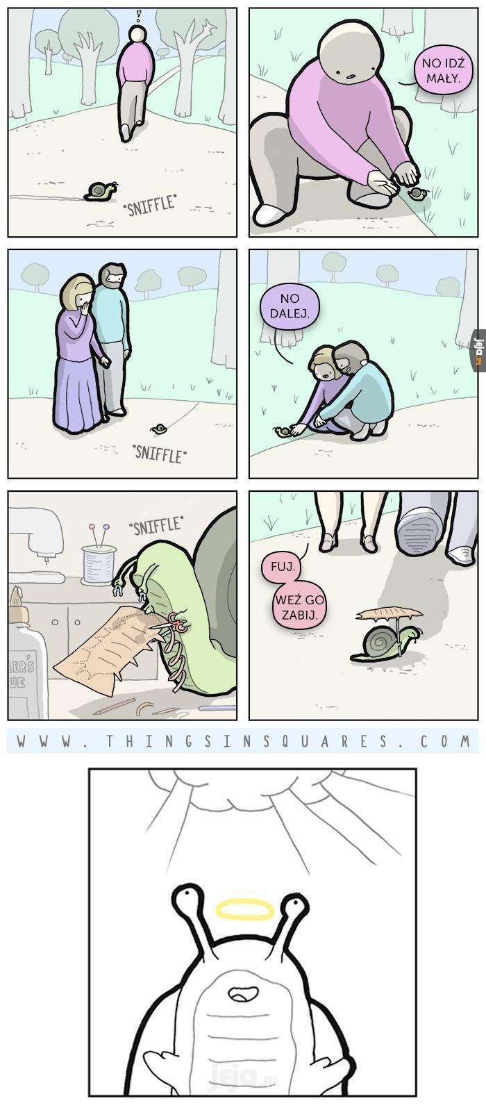 Biedny ślimaczek