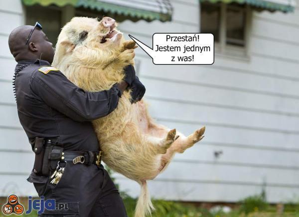 Aresztowanie...