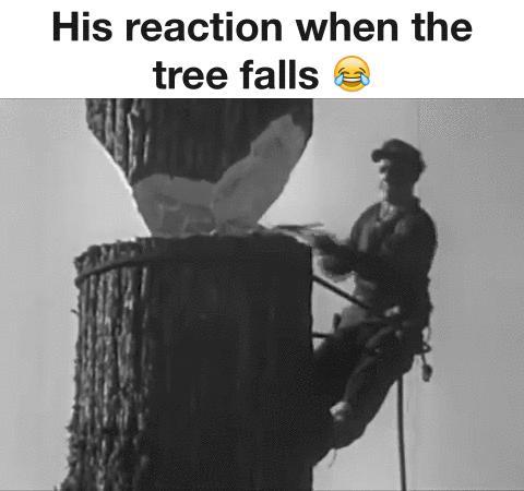 Jego reakcja, gdy drzewo spada...