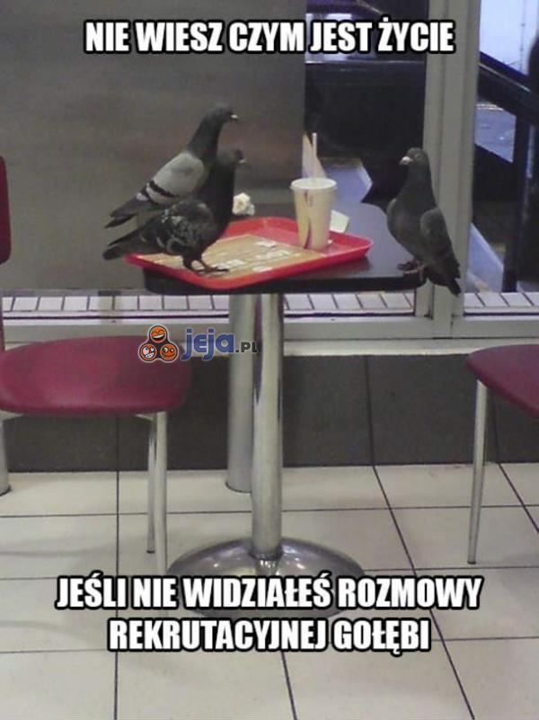 Rozmowa rekrutacyjna gołębi