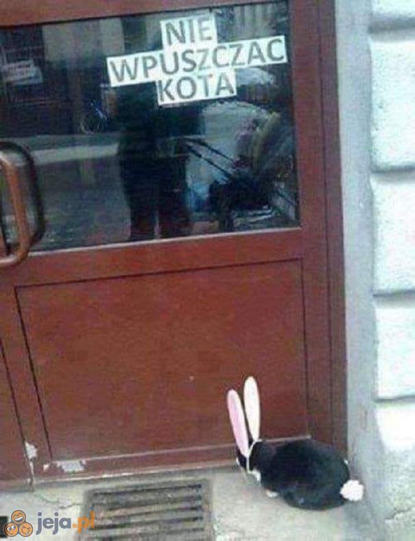 Ten to nie kot, tego można wpuścić