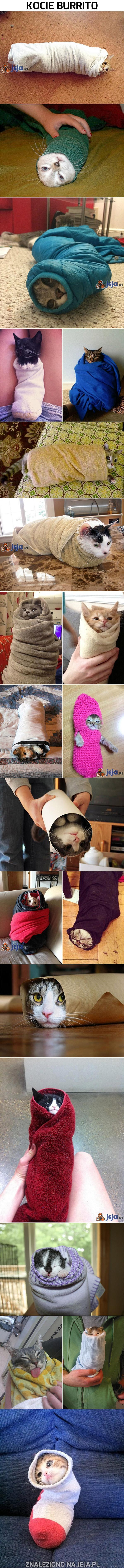 Kocie burrito