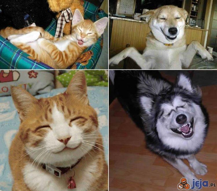 Uśmiechnięte zwierzęta