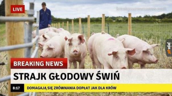 Dlaczego tylko krowy? To niesprawiedliwe!