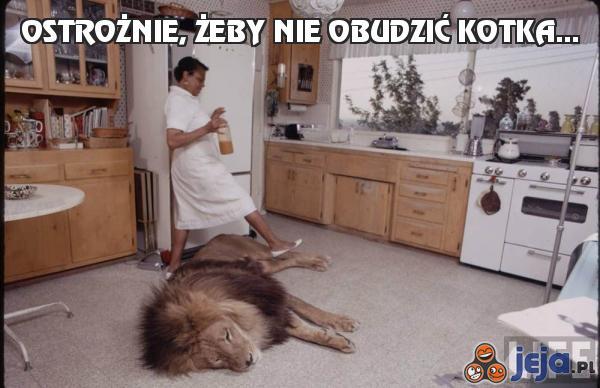 Ostrożnie, żeby nie obudzić kotka...
