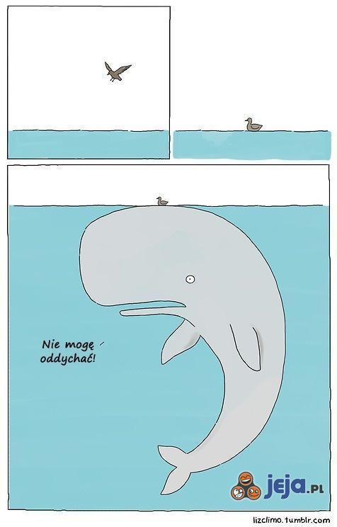 Jak udusić wieloryba