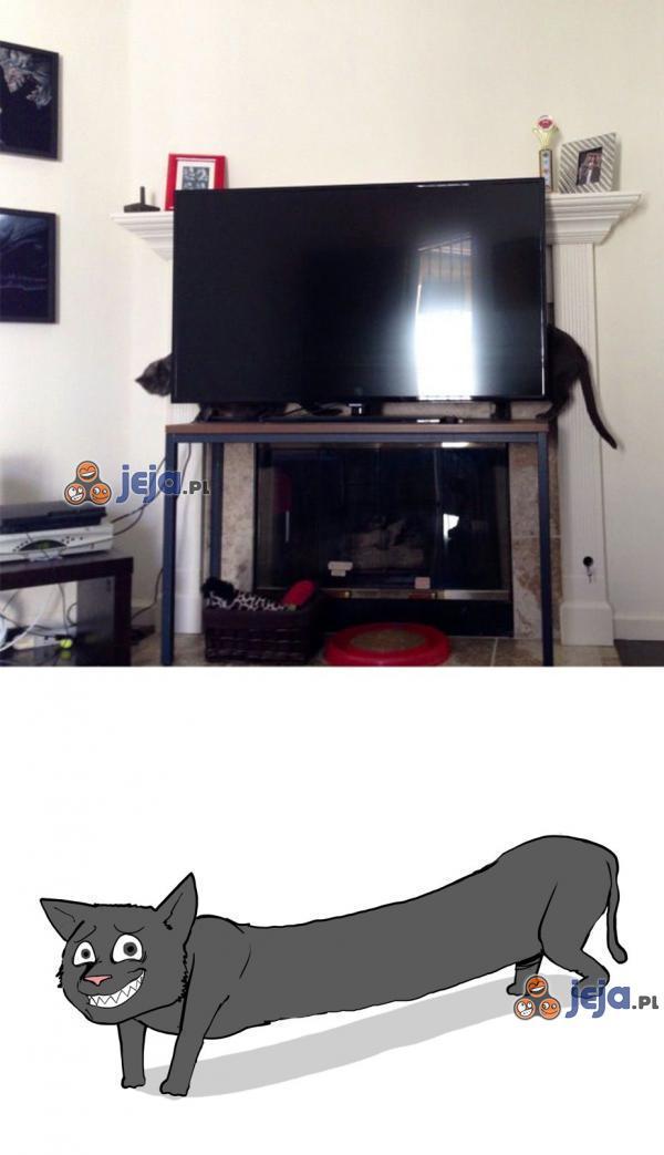 Dłuuugi kot