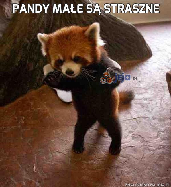 Pandy małe są straszne