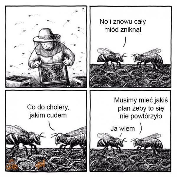 Z życia pszczoły