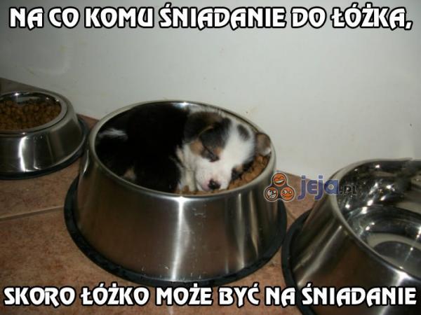 Pyszne, psie łóżko