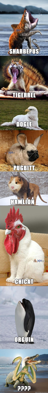 Dziwne egzotyczne zwierzęta