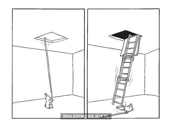 Samobójstwa zajączka: Zajączek i drabina