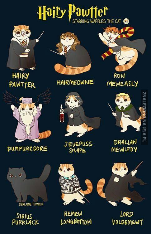 Tak powinien wyglądać Harry Potter