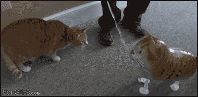 Kot i balonik