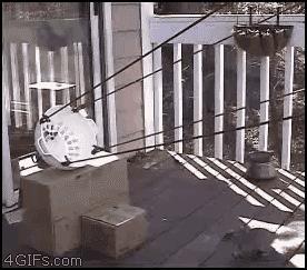 Miotacz wiewiórek