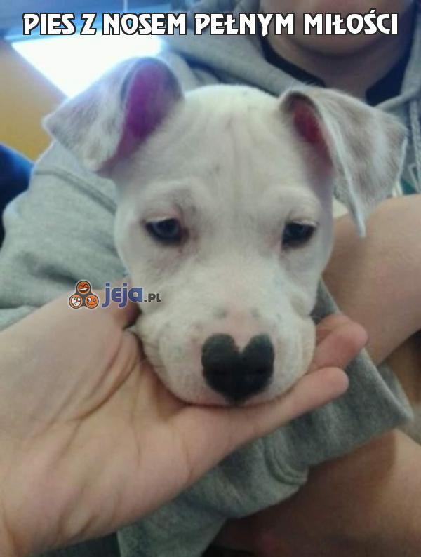 Pies z nosem pełnym miłości