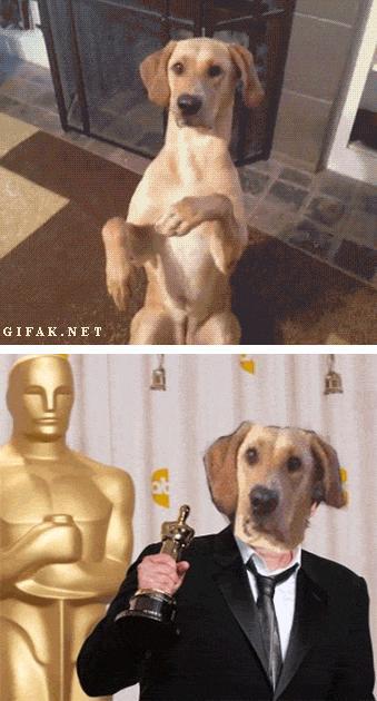 Psi aktor