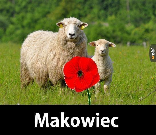 Makowiec