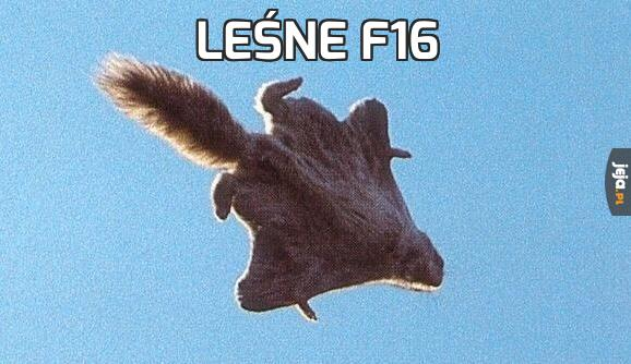 Leśne F16