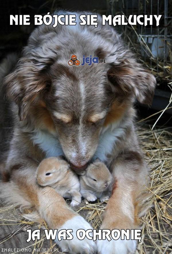 Pies i króliki