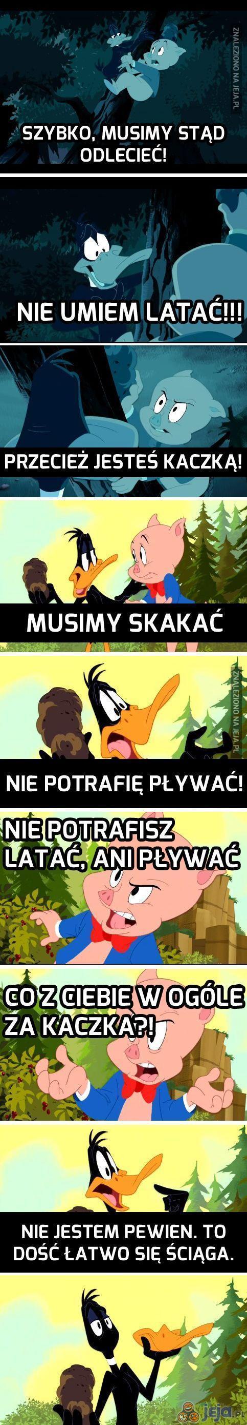 Nawet Daffy już nie jest pewien...