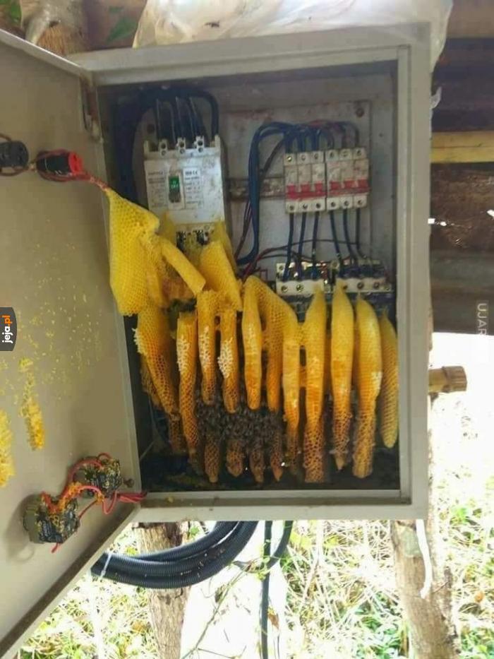 Elektryczny miód