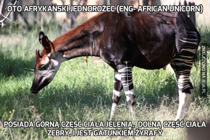 Afrykański jednorożec