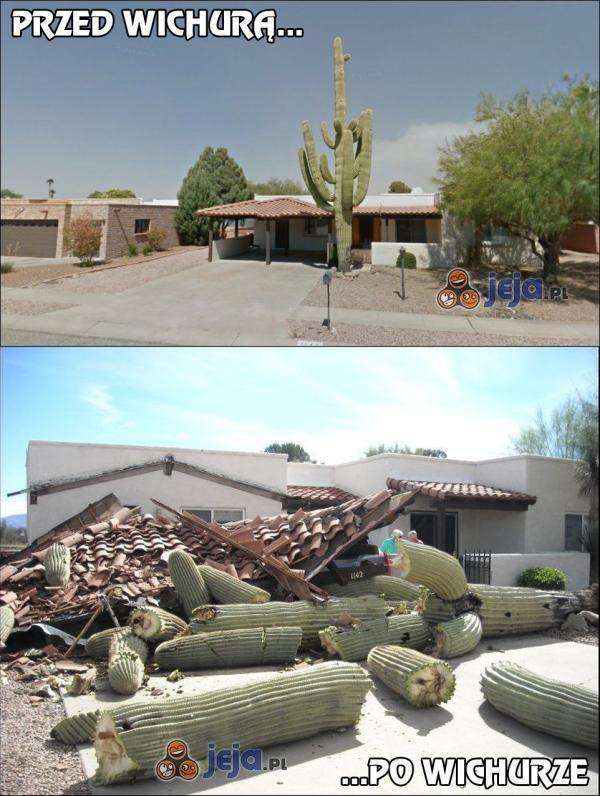 Upadek wielkiego kaktusa