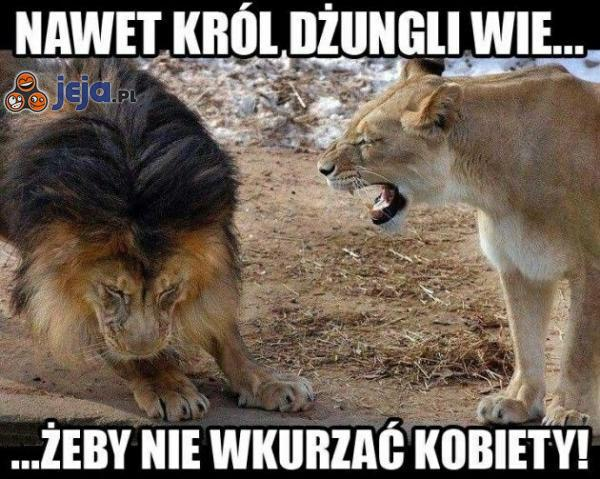 Nawet król dżungli wie...