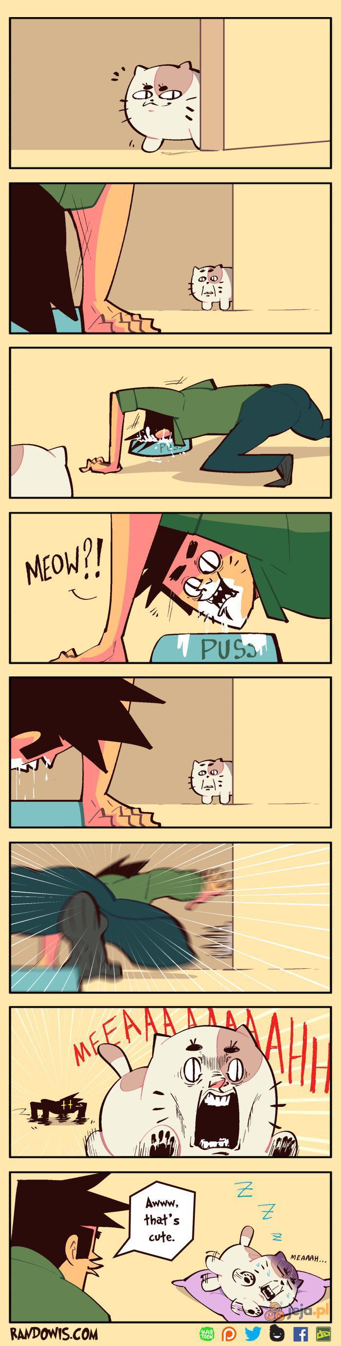 Lubisz sobie robić żarciki z kota?