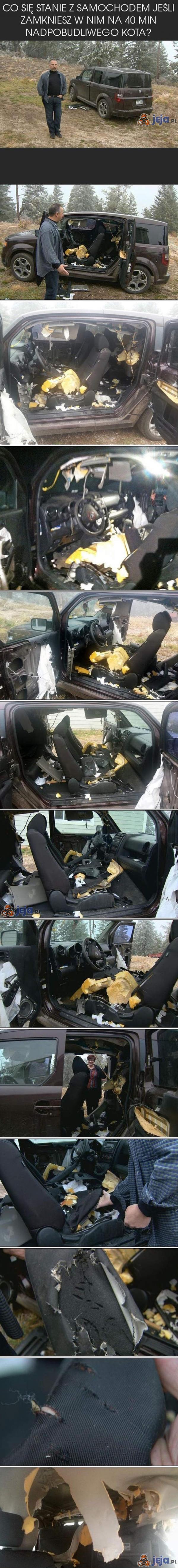 Nadpobudliwy kot sam w samochodzie