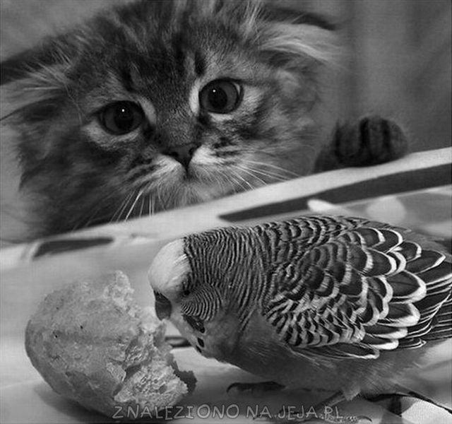Słodka papużka