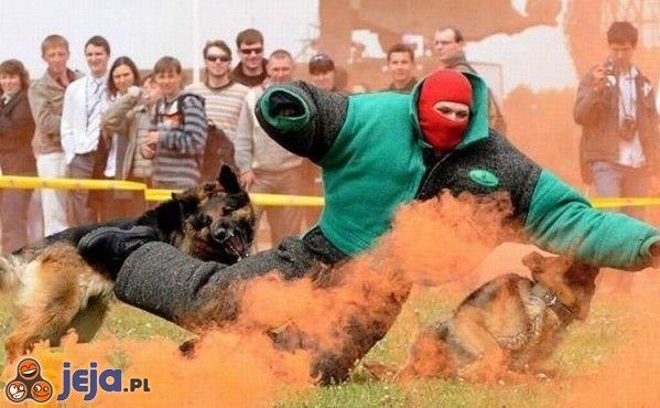 Atak owczarków