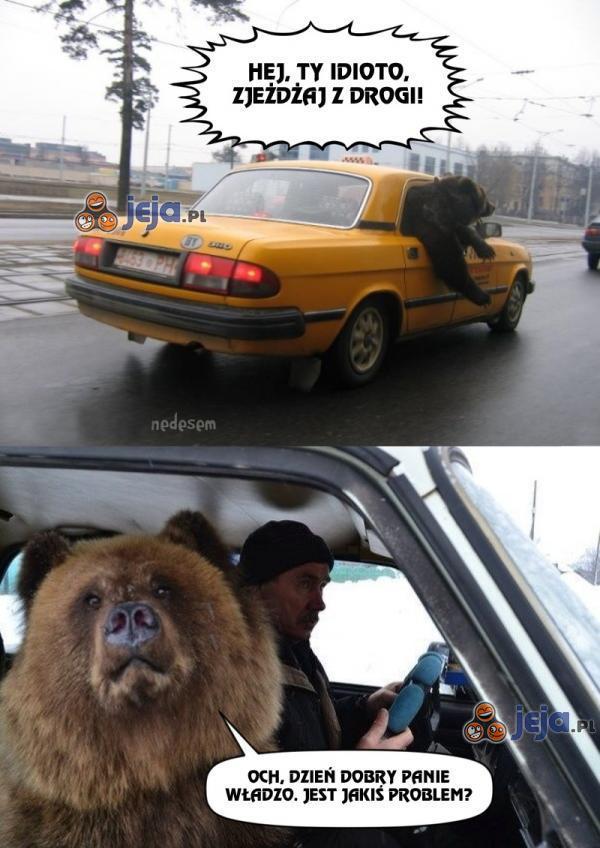 Uwaga, niedźwiedź jedzie!