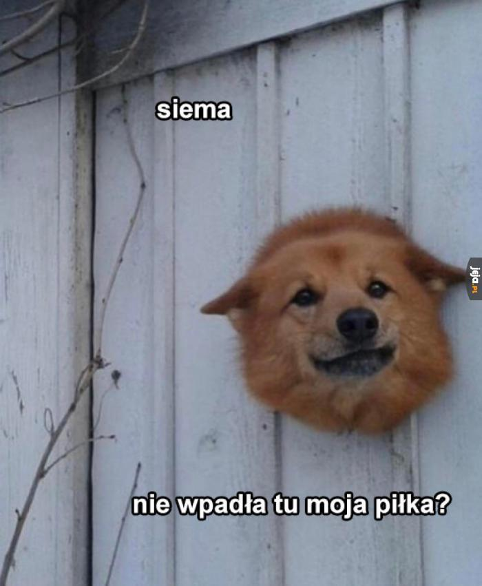 Siema, sąsiad!