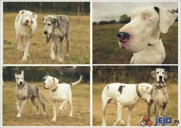 Przyjaźń jest wielka