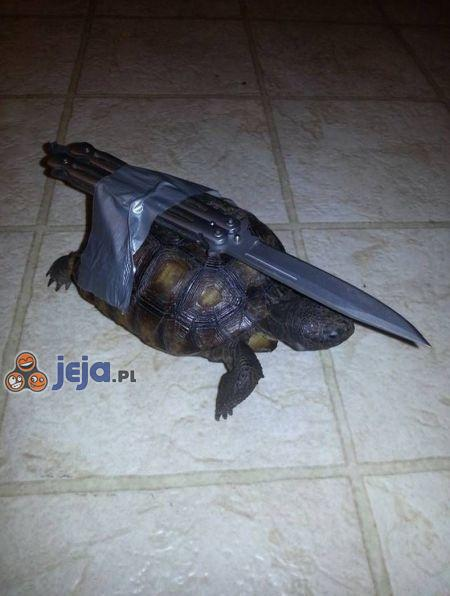 Żółw wojskowy