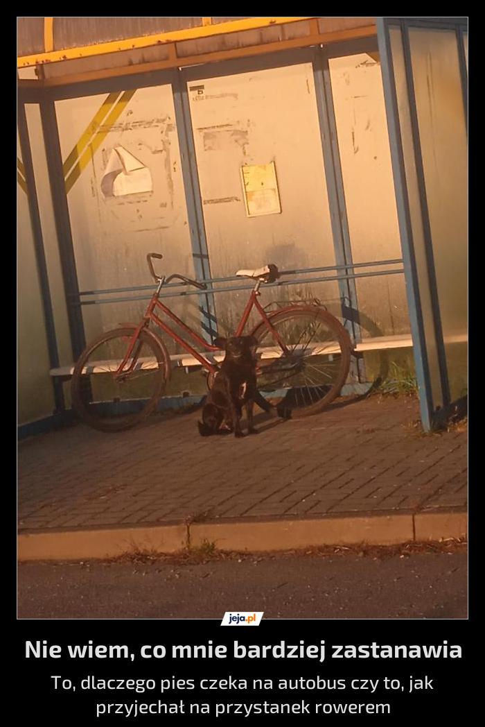 O psie, który jeździł autobusem