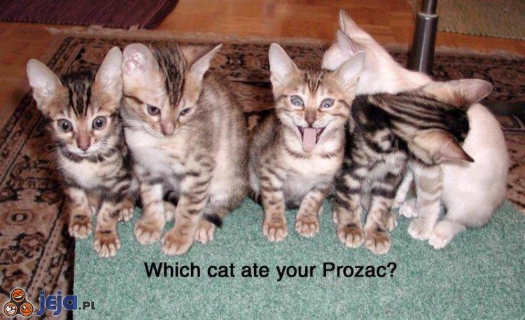 Naćpany kotek