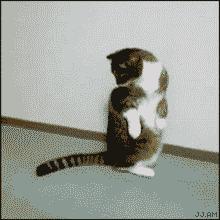 Tym razem cię mam!