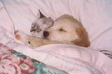 Przyjaźń psa i kota